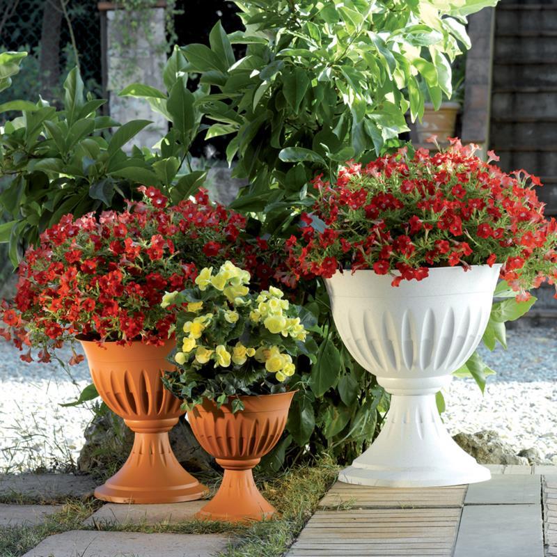 ALBA FLOWER CUP