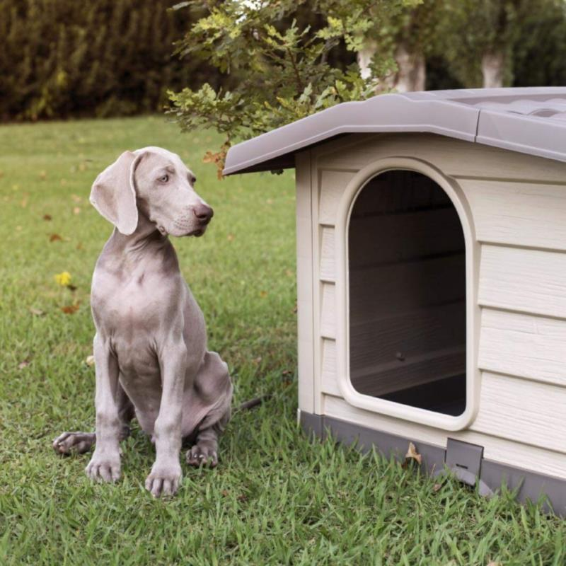 Doghouse BUNGALOW